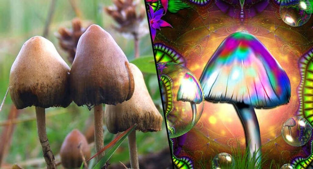 plant medicine, plant medicine ceremony, psychedelic mushrooms, plant medicine, plant medicine ceremony, magic mushroom, psychedelic mushrooms, psilocybin mushrooms,