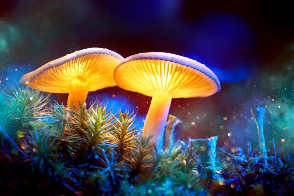 plant medicine, plant medicine ceremony, psychedelic mushrooms, plant medicine, plant medicine ceremony, magic mushroom, psychedelic mushrooms, psilocybin mushrooms,shamanic healing, soul loss, soul retrieval, shamanic healing retreats, shamanic weekend retreats,