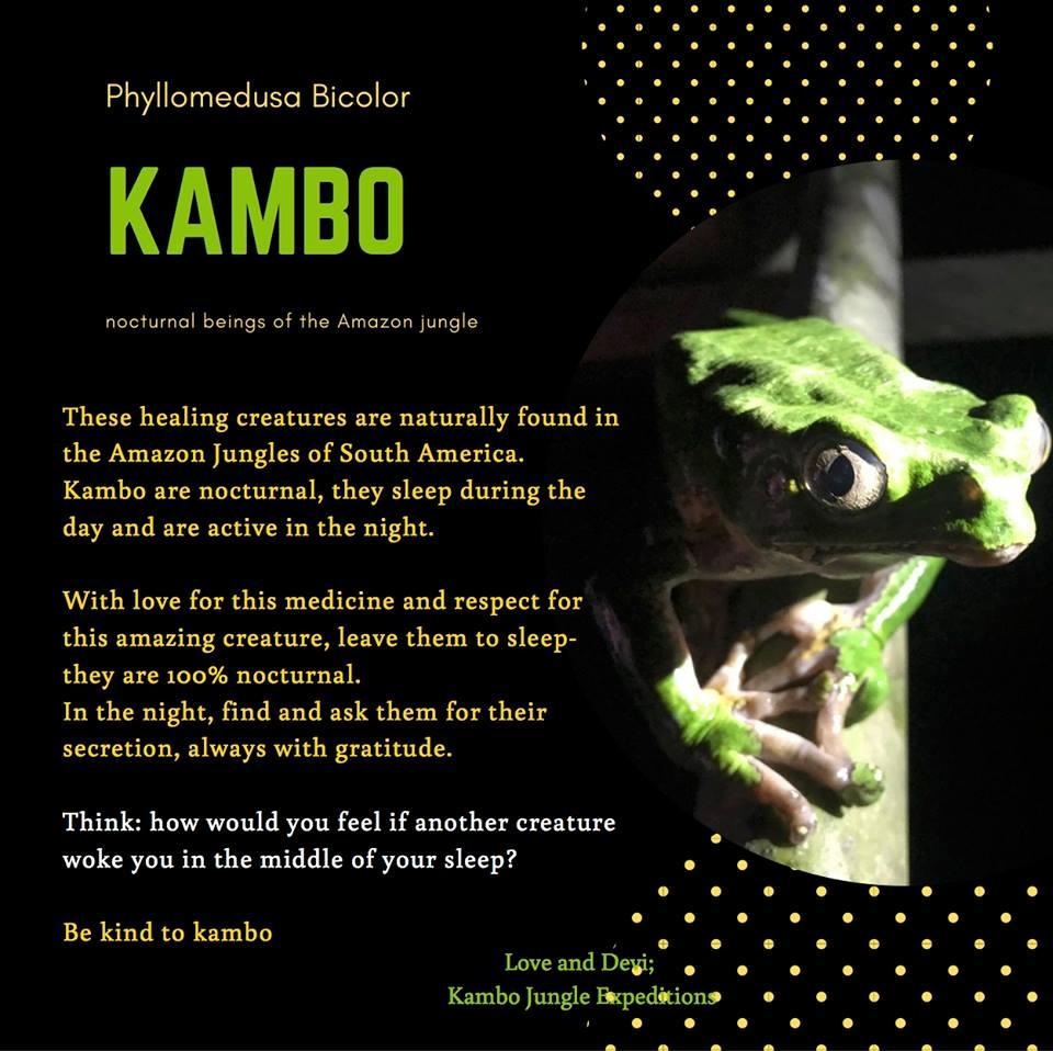 Kambo Treatment